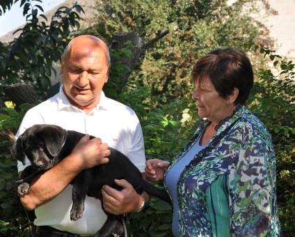 Zwart labradorteefje uit de combinatie van Noxa en Robin, gekweekt door Labradors Yochiver