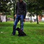 Zwart labrador Reutje Labradors Yochiver Nox Yochiver