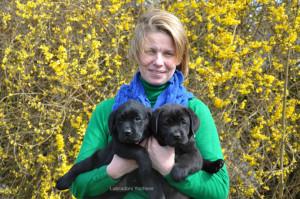 Ouna Yochiver en Onala Yochiver zijn twee zwarte labrador pups die hulp/geleidehond worden.