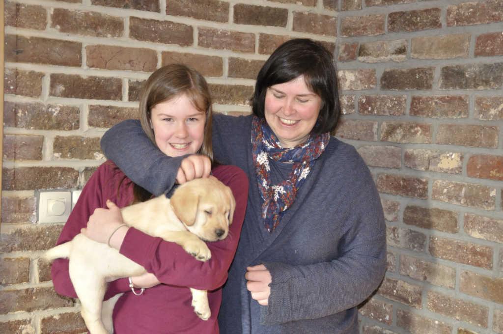 Beige labrador reu puppy Pearl Yochiver